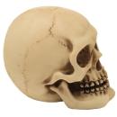 skull medium